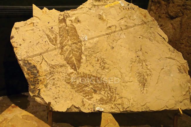 Fossile laisse dans la John Day Fossil lits National Monument, Oregon — Photo de stock