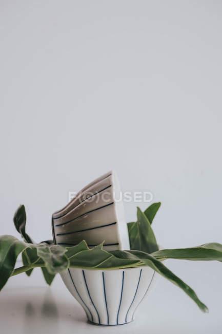 Hoja verde entre dos tazones de té sobre gris - foto de stock
