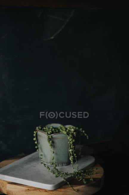 Natura morta di pianta in vaso peal sul bordo di marmo — Foto stock