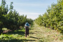 Apple Picking viagem — Fotografia de Stock