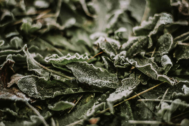 Folhas de outono foscas — Fotografia de Stock