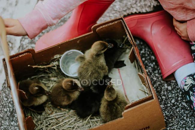 Niedliche kleine Entenküken — Stockfoto