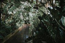 Plantes-feuilles vertes — Photo de stock