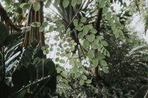 Explorar la sala de la selva en los reales jardines botánicos - foto de stock