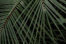 Textura de plantas naturales de vegetación - foto de stock