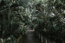 Bloom Kew Garden in Royal Botanic Gardens, — Stock Photo