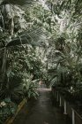 Kew Garden, London — Stock Photo