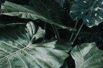Fondo de plantas en jardines botánicos - foto de stock