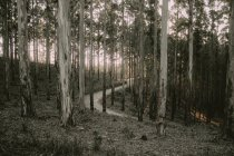 Knysna Forest, South Africa — Stock Photo