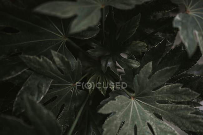 Green leafy plant — Stock Photo