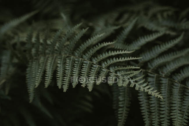 Fern leaf natural texture in botanical gardens — Stock Photo