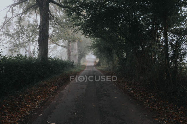 Outlooking view of road in countryside — Stock Photo