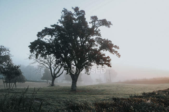 Idyllic foggy morning in countryside — Stock Photo