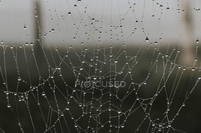 Delicate spider web covered with raindrops — Stock Photo