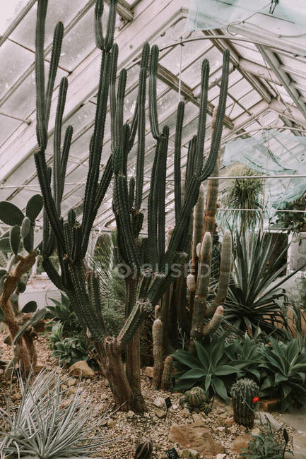 Greenhouse filled with exotic plants — Stock Photo