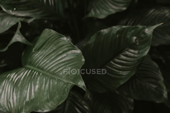 Natural plant pattern in Birmingham botanical gardens — Stock Photo