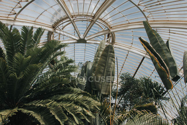 Exploring The Jungle Room  in Royal Botanic Gardens — Stock Photo