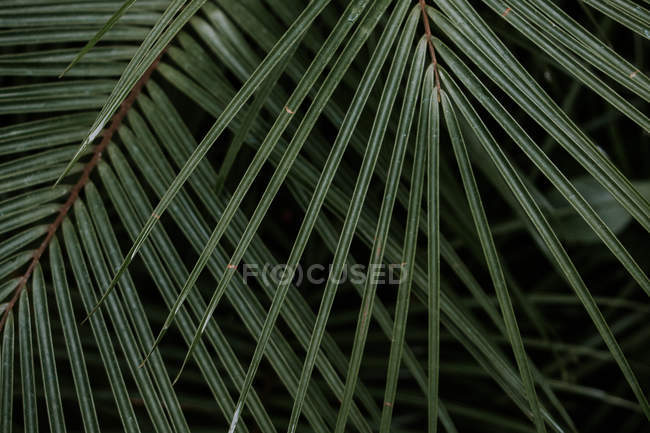 Greenery natural plants texture — Stock Photo