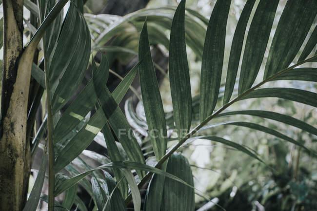 На тлі зелені — стокове фото