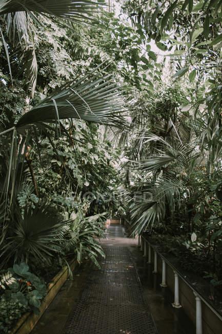 Jardín de Kew, Londres - foto de stock