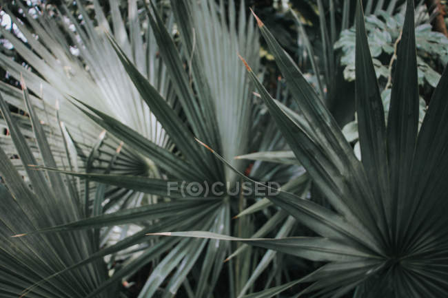Kew Garden. Green Natural Pattern — Stock Photo
