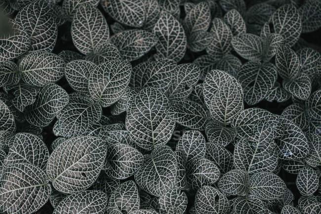 Motif de la nature pris au Kew Gardens — Photo de stock