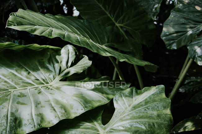 Plants background in Botanic Gardens, Kew, London — Stock Photo