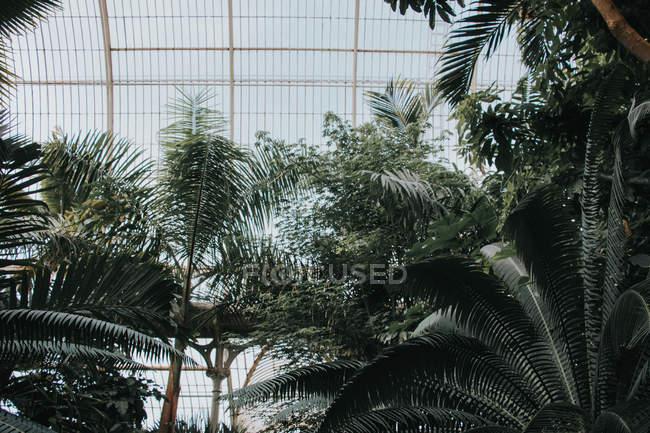 Вивчення саду К'ю-Гарденз. Рослини життя — стокове фото