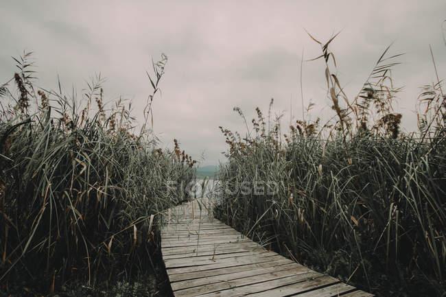 Причал между тростником — стоковое фото
