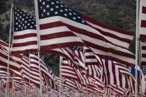 Agitando banderas americanas - foto de stock