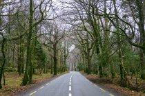 Strada attraverso il Parco nazionale di Killarney, Contea di Kerry, in Irlanda, Europa — Foto stock