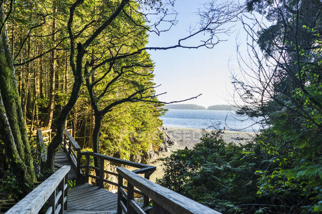 Tonquin park with trees and wooden bridge on the canadian westcoast, Tofino, British Columbia, Canada — Stock Photo