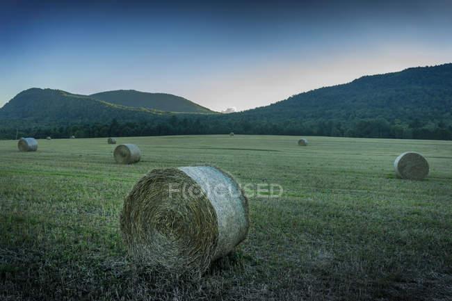 Pajares en campo de hierba y colinas en el fondo, Quebec, Canadá - foto de stock