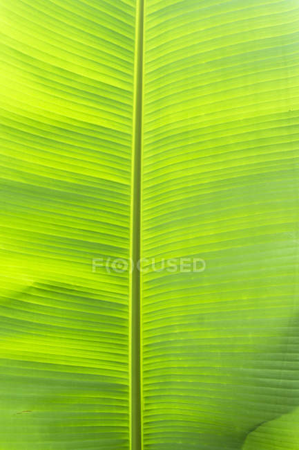 Plant green leaf, Maui, Hawaii, Usa — Stock Photo