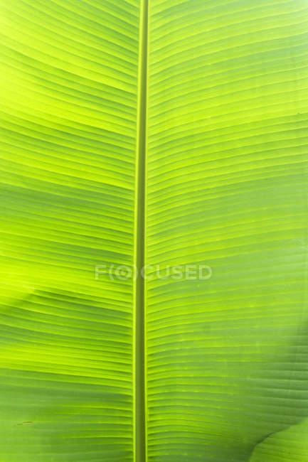 Planta de hoja verde, Maui, Hawaii, Estados Unidos - foto de stock