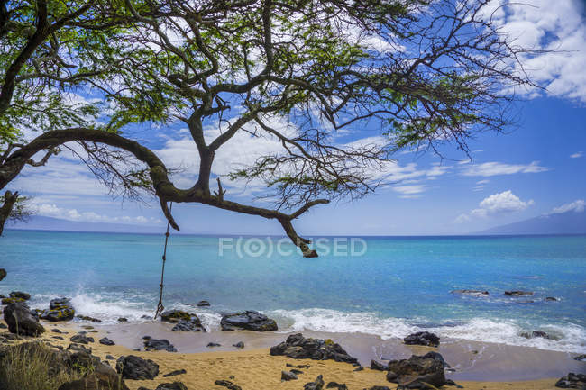 Coastline in Maui with tree and stones on sand on Pacific Island, Hawaii, Usa — Stock Photo