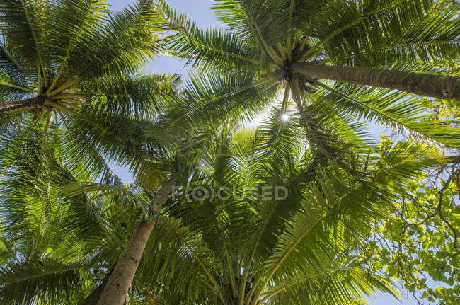 Green palm trees with sky on background during daytime, Central America — Stock Photo