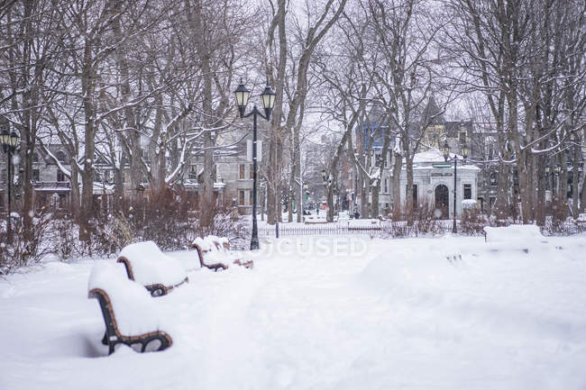 Street with benches in snow during winter season, Montreal, Quebec, Canada — Stock Photo