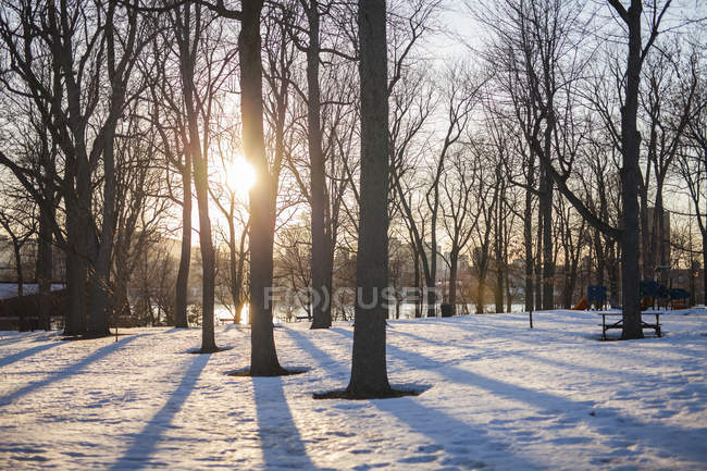 Park on ile st helene with trees in snow during winter, Montreal, Quebec, Canada — Stock Photo