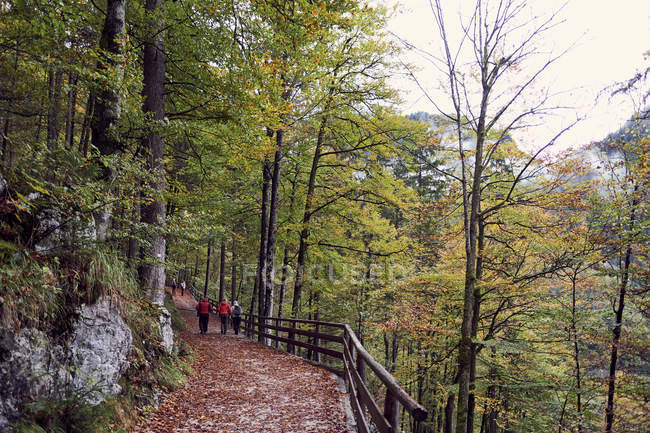 Parc national dans les Alpes bavaroises à l'automne, Berchtesgaden, Allemagne — Photo de stock