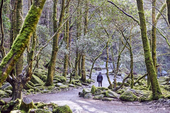 Mulher, explorar a floresta do Parque Nacional de Killarney, Condado de Kerry, Irlanda, Europa — Fotografia de Stock