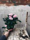 Жінка Холдинг троянди в горщик — стокове фото