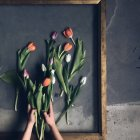 Woman creating floral arrangement — Stock Photo