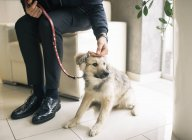 Homme tapote chien dans l'appartement — Photo de stock