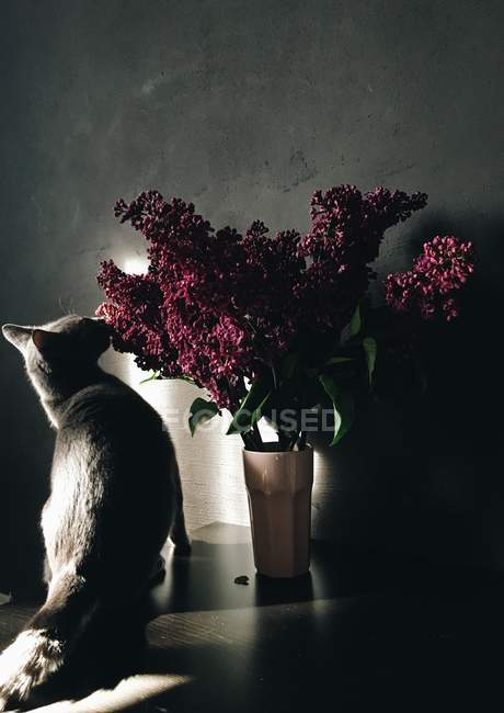 Cat sniffing lilac flowers — Stock Photo