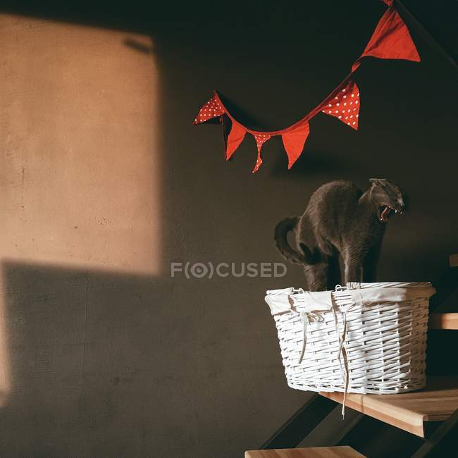 Cat yawning in wicker basket — Stock Photo