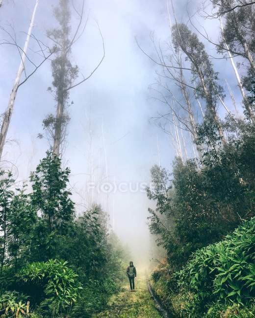 Uomo a piedi attraverso la foresta — Foto stock