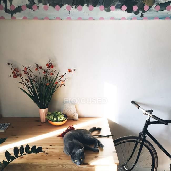 Gato deitado na mesa de madeira — Fotografia de Stock