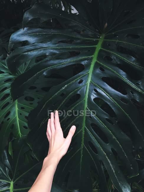 Female hand touching big leaf — Stock Photo