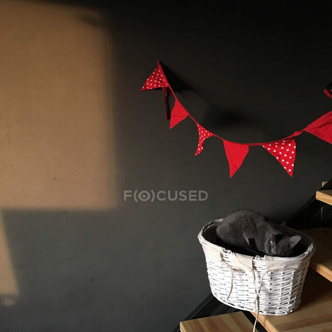 Cat lying in wicker basket — Stock Photo